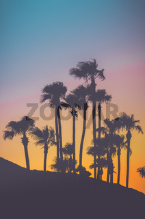 Tropical Palm Trees At Sunset