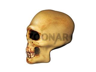 Schädel eines Menschen