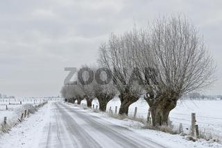 knorrige Kopfbäume... Bislicher Insel * Nordrhein-Westfalen * im Winter bei Schnee und Eis