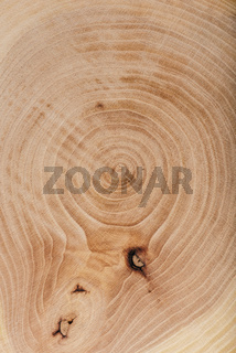 Ash wood slab texture with annual rings