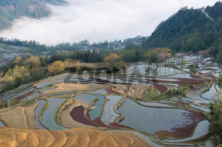 beautiful terraced field landscape