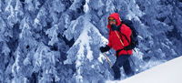 Hiker makes his way on snowy slope in snow-covered magic forest