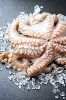 Fresh catched octopus offered as closeup on crushed ice at a display counter