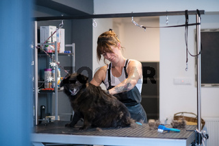 pet hairdresser woman cutting fur of cute black dog