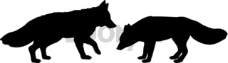 Silhouette of two foxes. The fox family.