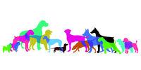 Dogs silhouette breeds set - illustration