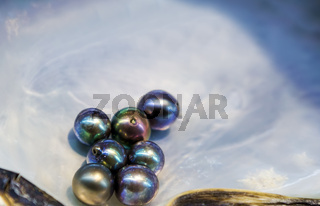 Multicolor natural pearls in mother-of-pearl
