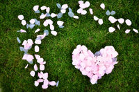 Rose petals heart on green grass. Valentines day card.