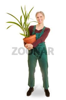 Ältere Frau mit Pflanze als Gärtnerin