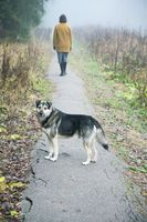 Abandoned dog and woman leaving her on a foggy morning