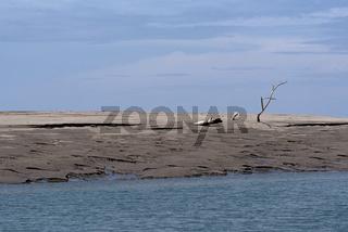 Toter Baum auf einer Sandbank in der Mündung des Rio Platanal, Panama