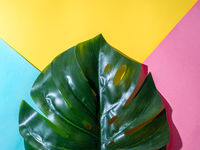 Monstera leaf on colorful background