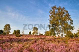 Lueneburger Heide
