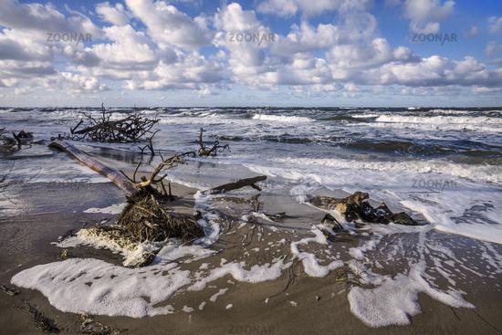 Baltic sea, Darsser west beach - alluvial...