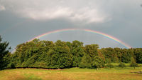 Beautiful colourful rainbow over the wood