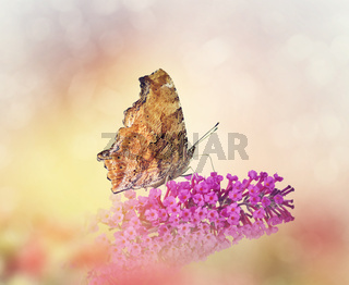 Butterfly feeds on flowers