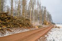 Wintermorgen aufgehende Sonne Waldweg mit Holzpolter