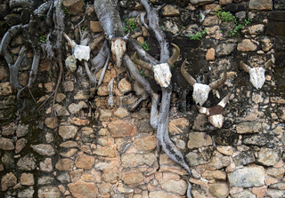 Zebuhörner als Opfergaben auf dem Königshügel von Ambohimanga, Avaradrano, Madagaskar