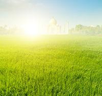 Paddy rice fields with Taj Mahal
