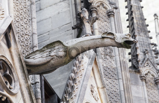 Gargoyle of Notre Dame cathedral in Paris