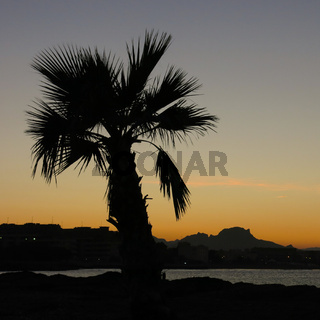 Sunset in Denia, Spain. Outlines of a palm.