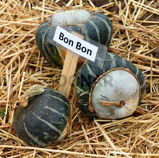 Bon Bon, Kuerbis; Speisekuerbis