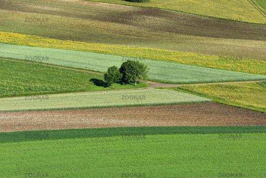 swabian alps; swabian highlands; landscape with crop fields; grainfields; Germany;