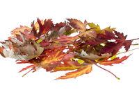 Häufchen mit Ahornblättern mit Herbstfärbung