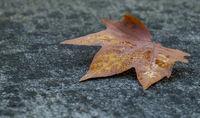 Herbstblatt liegt auf einer Mauer