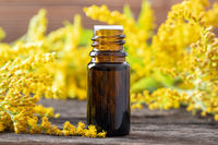 A bottle of goldenrod essential oil and flowers