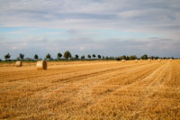 Straw bales on the field at the end of summer