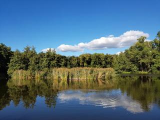 Teich im Naturschutzgebiet Bogensee in Berlin