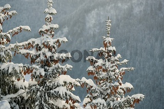 Winter Landscape with Trees, Falling Snow