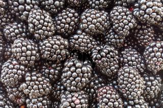 Blackberry fruit - blackberries. Background of very large blackberry fruit. Texture of black berry. Nutritional background. Blackberry texture - large blackberries. Vegetarian natural food. Vitamins.