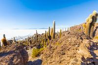 Bolivia Uyuni rocks and cactus on Incahuasi island at sunset