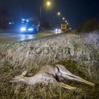 Totes Reh am Straßenrand nach Wildunfall