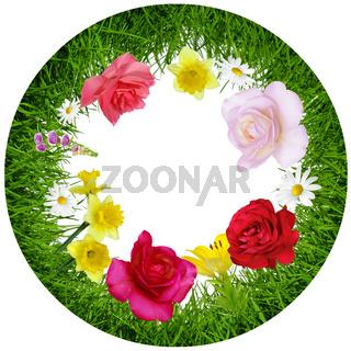 Blumen 338