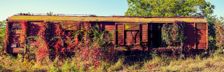 Abandoned freight wagon captured by vegetation