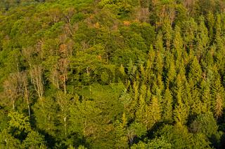 Güntersberge im Harz Harzlandschaft