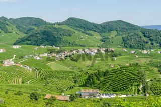Prosecco White Wine Vineyards , in Prosecco Valley, Vadobbiadene Treviso Italy