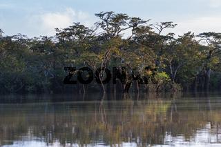 Landschaft im Naturreservat Cuyabeno
