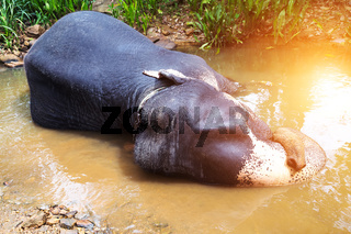 Elephant attraction river Spring sun undefined