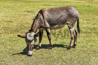 Esel mit Hut | Donkey with hat