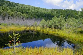 Torfmoor