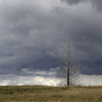 Noir Flohay... High Fens, Eifel, single dead tree with dark clouds above