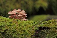 Mushroom in the moss