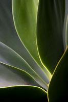 Green leaves in backlight