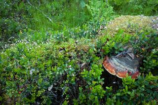 Plants growing in old tree stump