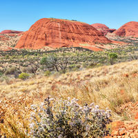 AUSTRALIA,AYERS ROCK-CIRCA AUGUST 2017-mountain in ayers rock  park