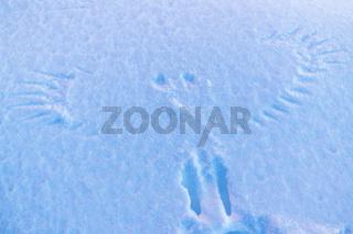 Vogelspuren im Schnee, Hasvik, Soeroeya, Finnmark